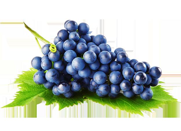 svježe crno grožđe � vrana web